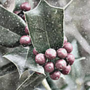 Snowy Holly Art Print