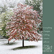 Snowy Maple With Buddha Quote Art Print