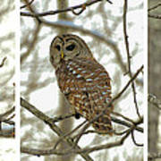 Snowy Morning Owl Triptic - 10dec563a Art Print