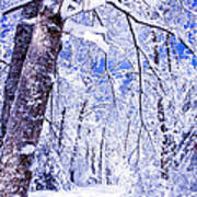 Snowy Path Art Print by Rob Travis