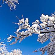 Snowy Trees And Blue Sky Art Print