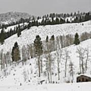 Snowy Wilderness Art Print