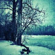 Snowy Woods By A Lake Art Print