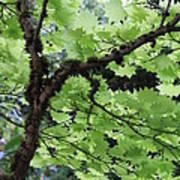Soft Green Leaves Art Print
