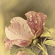 Soft Peddles Art Print