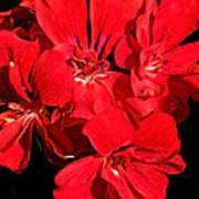 Soft Petals Cascade Art Print