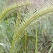 Soft Rain On Grass Art Print