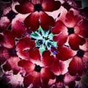 Soft Scarlet Floral Art Print