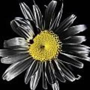 Solarized Daisy Art Print