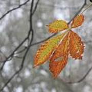 Solitary Leaf Art Print