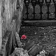 Solitary Rose Art Print by Renee Barnes