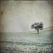 Solitary Tree In Winter. Auvergne. France. Europe Art Print