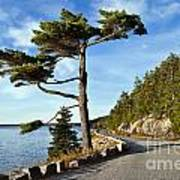 Somes Sound Maine Art Print