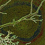 Songbird Green Art Print