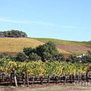 Sonoma Vineyards - Sonoma California - 5d19307 Art Print by Wingsdomain Art and Photography