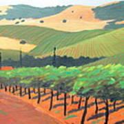 Sonoma Vinyard Art Print