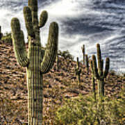Sonoran Desert II Art Print
