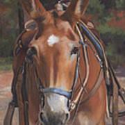 Sorrel Mule Art Print
