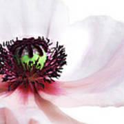 Soul Of Poppy Art Print