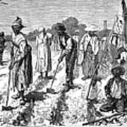 South: Cotton Planting Art Print by Granger