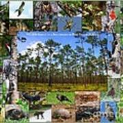 Southeastern Pine Forest Wildlife Poster Art Print