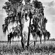 Southern In Black And White Art Print