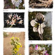 Southwest Wildflower Collection #2 Art Print