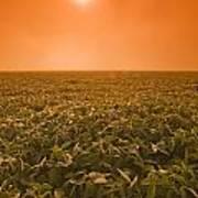 Soybean Field On A Misty Morning Art Print