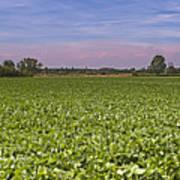 Soybean Field Art Print by Paolo Negri