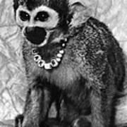 Space Monkey: Baker, 1979 Art Print