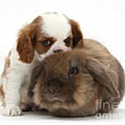 Spaniel Puppy And Rabbit Art Print