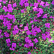 Spanish Shawl Flowers Art Print