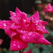 Sparkled Rose Art Print by Beverly Hammond