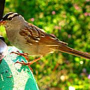 Sparrow In Morning Light  Art Print