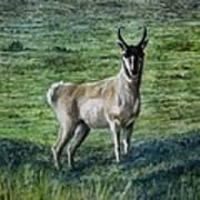 Speed Goat Art Print