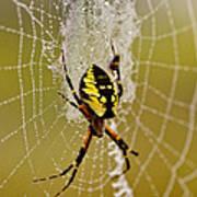 Spider Power Art Print