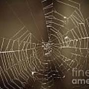 Spider Web 1.0 Art Print