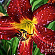 Spiderman The Day Lily Art Print