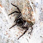 Spiders Trap Art Print