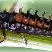 Spiky Caterpillar  Art Print by Maureen  McDonald