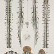 Spinal Cord Anatomy, 1844 Artwork Art Print
