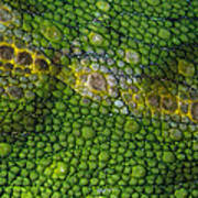 Spiny Desert Rhinoceros Chameleon Art Print