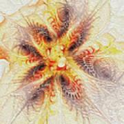 Spiral Collection Art Print