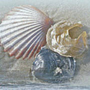 Spirit Of The Sea - Seashells And Surf Art Print