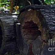 Split A Piece Of Wood Art Print