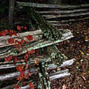 Split Rail Fence Art Print
