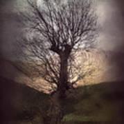 Spook-tree Art Print