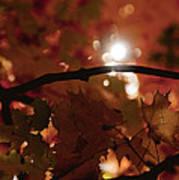 Spotlight On Fall Art Print