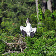 Spread Stork Art Print