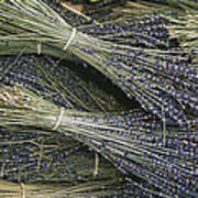 Sprigs Of Lavender, Provence Region Art Print